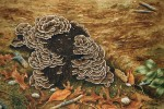 Autumn Stump with Turkey Tail Fungus